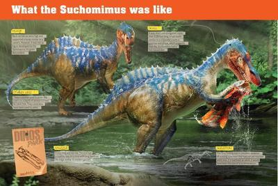 Infographic of the Suchomimus, a Piscivorous Dinosaur That Lived During the Cretaceous Period