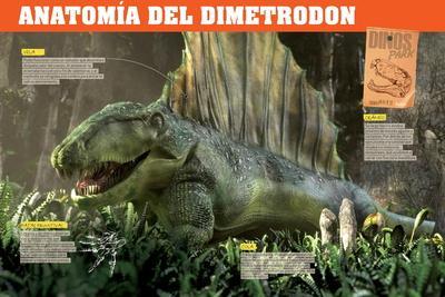 Infografía Del Dimetrodon, Depredador Del Pérmico (Era Paleozoica)