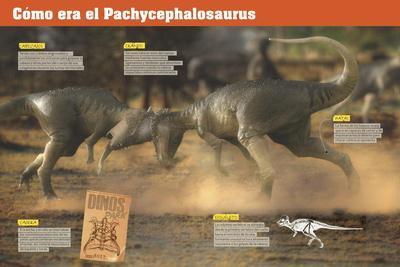 Infografía Sobre Los Pachycefalosaurios, Unos Dinosaurios Herbívoros Del Cretácico