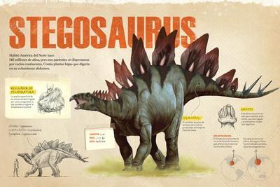 Infografía Del Stegosaurus, Dinosaurio Perteneciente a Los Ornitisquios, Herbívoro Del Jurásico
