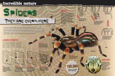 Infographic on the Anatomy and Diet of Spiders and How They Spin their Webs