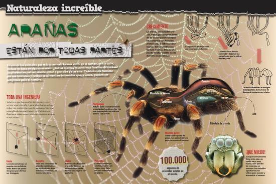 Infografía Sobre La Araña: Anatomía, Muda Y Formación De La Telaraña ...