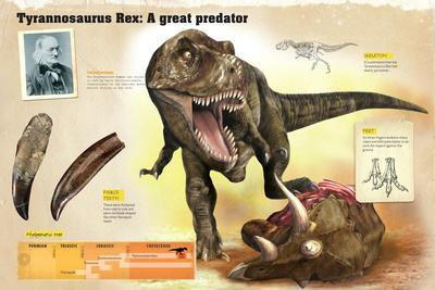Infographic of the Tyrannosaurus Rex, its Discoverer and its Phylogenetic Tree