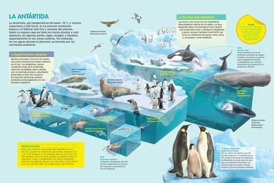 Infografía De La Fauna Que Habita En El Medio Más Frío Y Ventoso Del Planeta, La Antártida