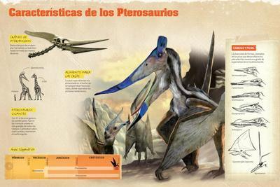 Infografía Sobre Los Pterosaurios, Reptiles Voladores, Cráneo, Crianza Y Árbol Filogenético