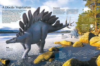 Infographic of Of Stegosaurus, a Herbivorous Dinosaur That Lived During the Late Jurassic