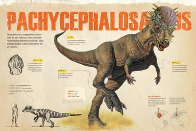 Infografía Del Pachycephalosaurus, Dinosaurio Herbívoro Del Cretácico