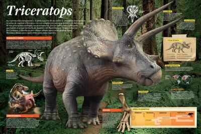 Infografía Del Triceratops, Dinosaurio Herbívoro Que Vivió Durante Finales