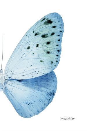 Miss Butterfly Euploea - X-Ray Right White Edition