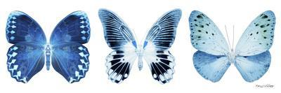 Miss Butterfly X-Ray Panoramic White IV