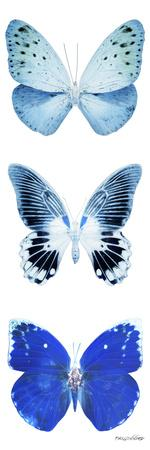 Miss Butterfly X-Ray White Pano II