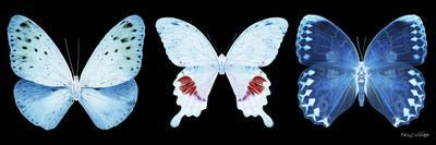 Miss Butterfly X-Ray Panoramic Black IV