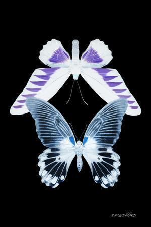 Miss Butterfly Duo Brookagenor II - X-Ray Black Edition