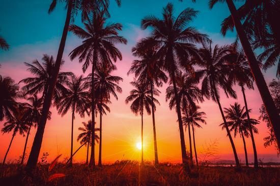 Silhouette Coconut Palm Trees On Beach At Sunset. Vintage