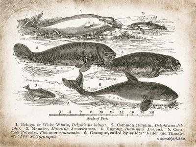 Antique Whales I