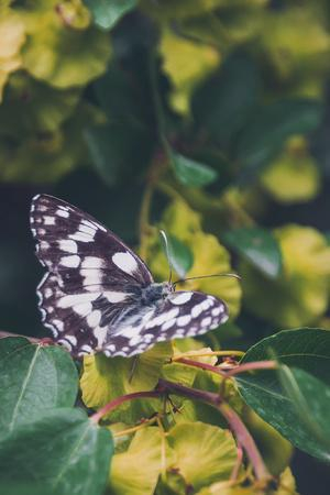 Butterfly, Flower, Colorful, Nature, Spring, Wildlife, Leaf