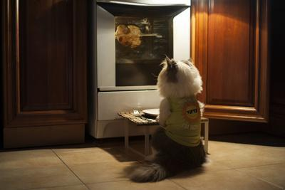 Cat Expects Cooking Chicken