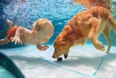 Funny Little Child Play with Fun and Train Golden Labrador Retriever Puppy in Swimming Pool, Jump A