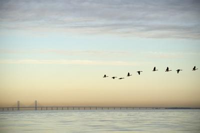 Flock of Birds Flying near Bridge