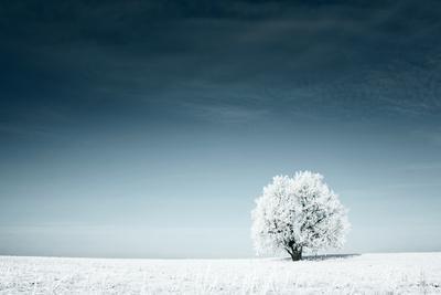 Alone Frozen Tree in Snowy Field and Dark Blue Sky
