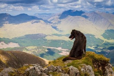 Dog Looking at Epic View from Scottish Munro, Ben Starav.