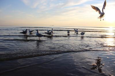 Birds on the Sunset. Seagulls at Sunset on the Sea Coast.