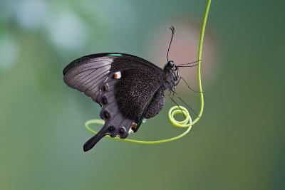 A Butterfly is a Mainly Day-Flying Insect of the Order Lepidoptera, the Butterflies and Moths