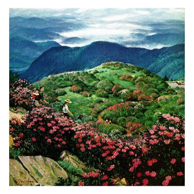 """""""Appalachian Rhododendrons,"""" May 27, 1961"""