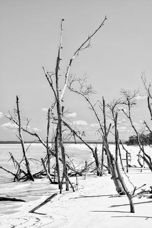 Cuba Fuerte Collection B&W - Desert of White Trees VI