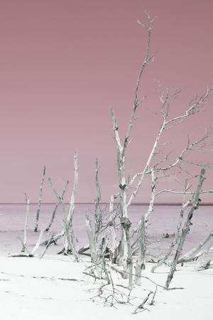 Cuba Fuerte Collection - Wild White Sand Beach III - Pastel Pink