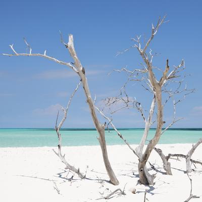 Cuba Fuerte Collection SQ - Blue Stillness