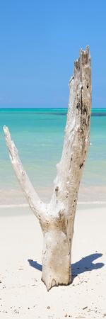 Cuba Fuerte Collection Panoramic - Alone on the Beach