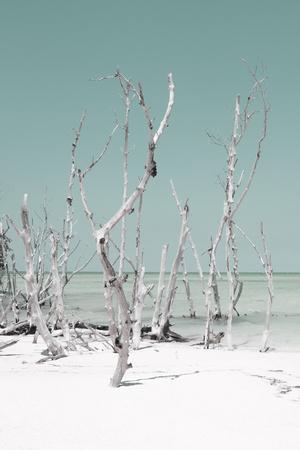 Cuba Fuerte Collection - Wild White Sand Beach II - Pastel Coral Green