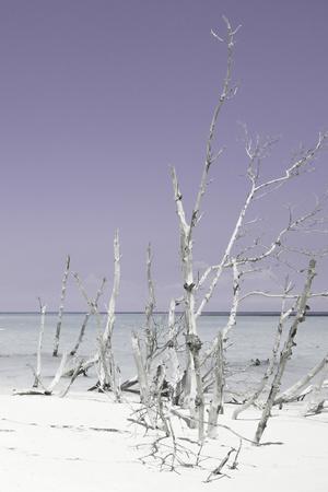 Cuba Fuerte Collection - Wild White Sand Beach III - Pastel Mauve