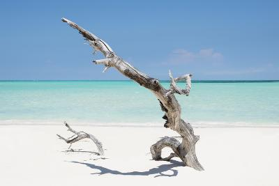 Cuba Fuerte Collection - Solitary Tree on the Beach