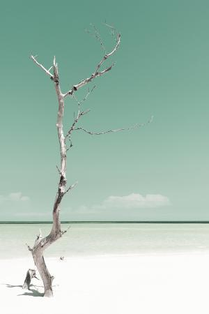 Cuba Fuerte Collection - Solitary Tree - Pastel Coral Green