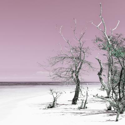 Cuba Fuerte Collection SQ - Pale Violet Summer