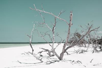 Cuba Fuerte Collection - Tropical Beach Nature - Pastel Turquoise