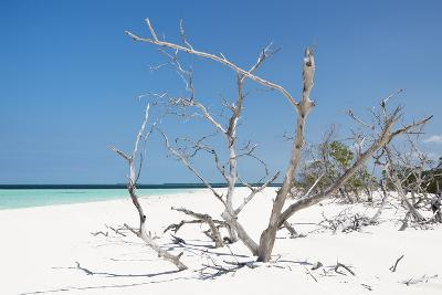 Cuba Fuerte Collection - Tropical Beach Nature