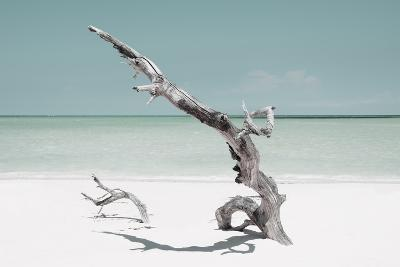 Cuba Fuerte Collection - Solitary Tree on the Beach - Pastel Aquamarine