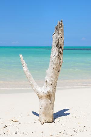 Cuba Fuerte Collection - Alone on the Beach