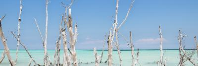 Cuba Fuerte Collection Panoramic - Ocean Wild Nature