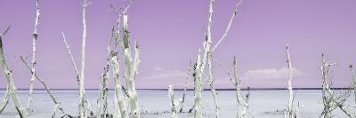 Cuba Fuerte Collection Panoramic - Ocean Wild Nature - Pastel Purple