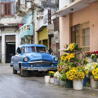 Cuba Fuerte Collection SQ - Sunflowers