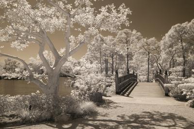 Bridge & Trees At Japanese Gardens, Delray Beach, Florida '10