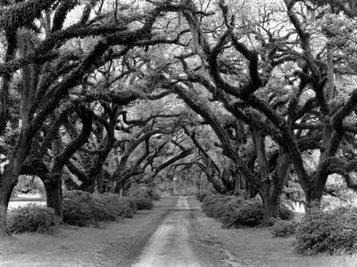 Path In The Oaks #2, Louisiana