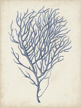 Indigo Coral VI