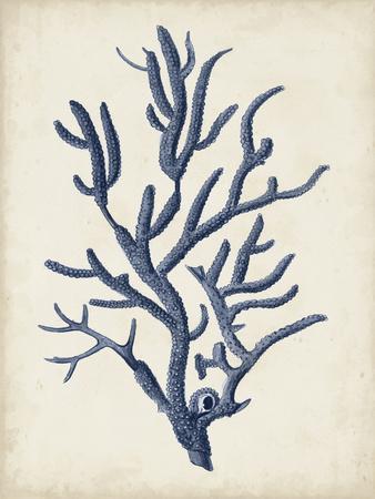Indigo Coral IV