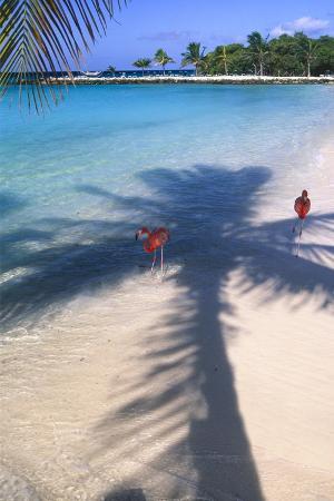 Tropical Beach with Pink Flamencos Aruba