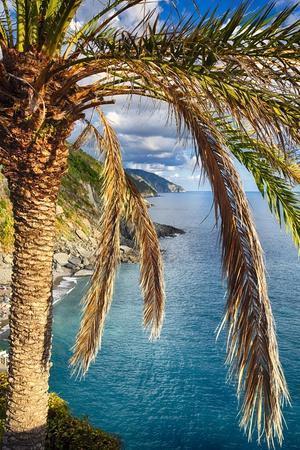 Palm Tree on the Hillside, Vernazza, Italy